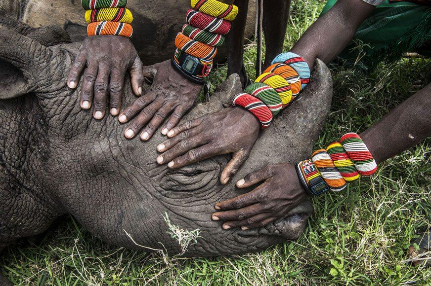 Secondo premio Natura, Foto singole Ami Vitale, Stati Uniti, National Geographic Lewa Downs, Kenya del Nord