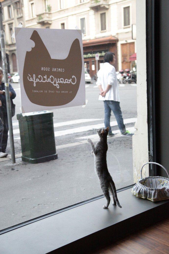 Crazy Cat Cafè in Milan